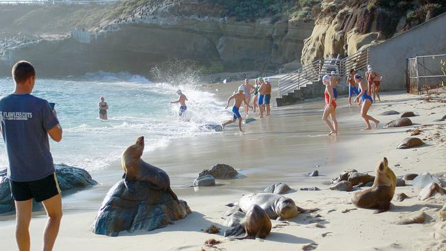 City Fails To Meet Parks Beaches Deadline On Sea Lion Issue La