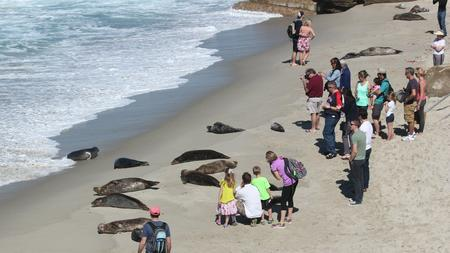 Without A Park Ranger Or Seal Conservancy Docent Present To Advise Otherwise Tourists Crowd In