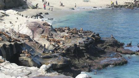 At Least Two Sea Lion Bites Have Been Reported In The Past Three Months La