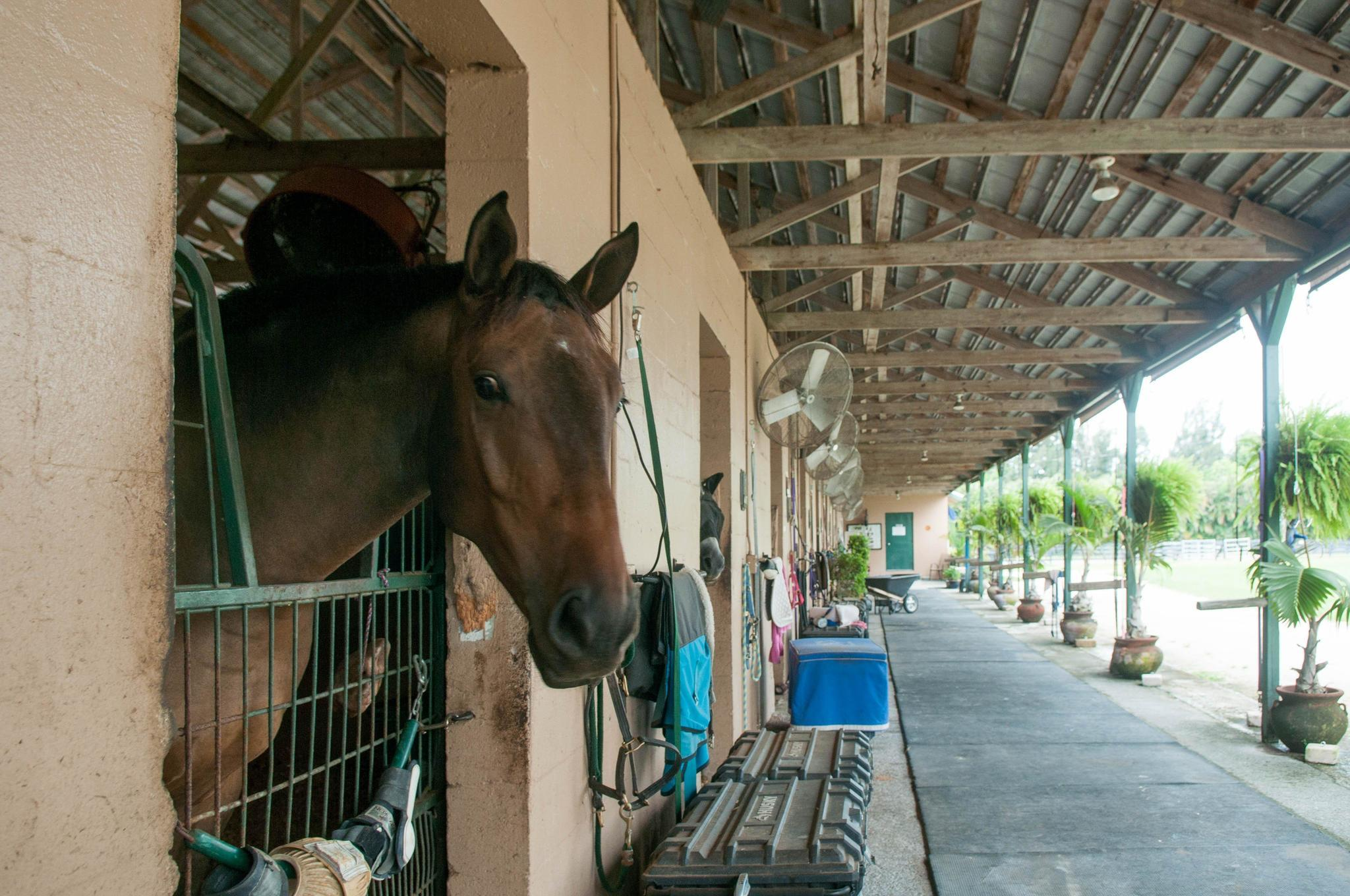 Horses Find Shelter From Hurricanes At Facility Sun Sentinel