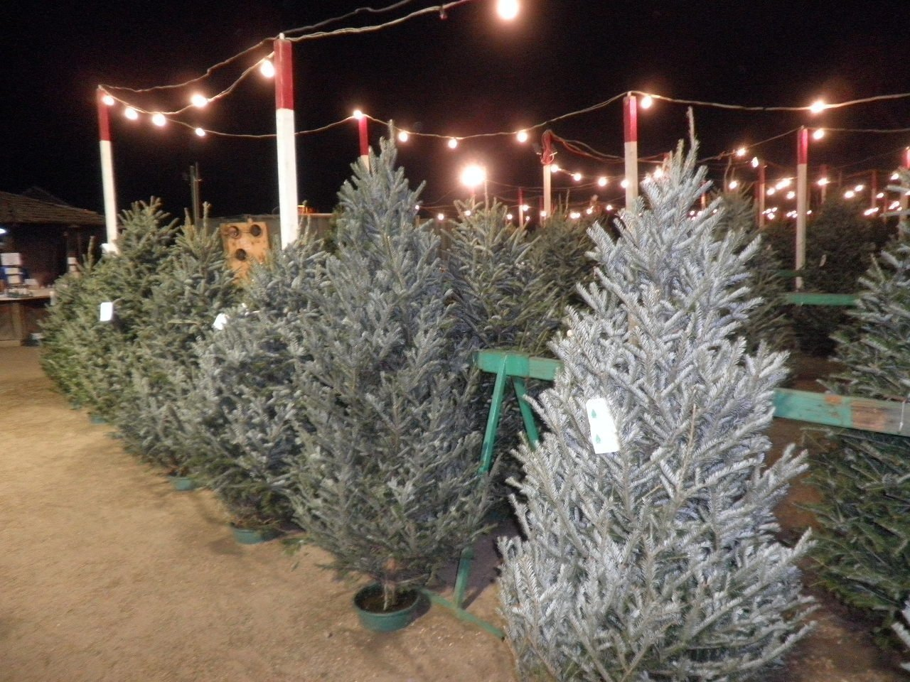 Check it out: Evergreen Nursery Christmas tree lots - The San Diego ...