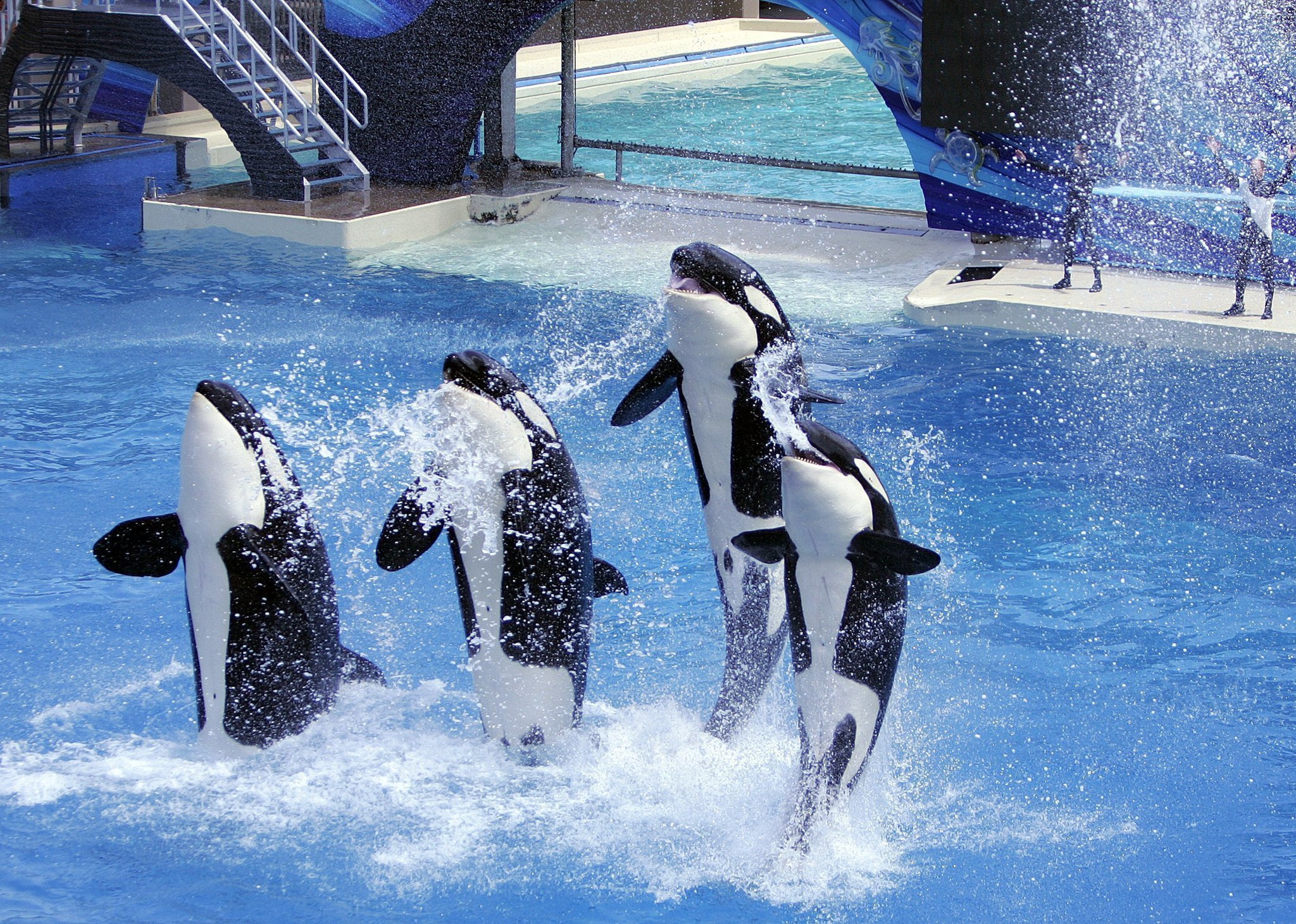 bill would ban seaworld orca shows - the san diego union-tribune