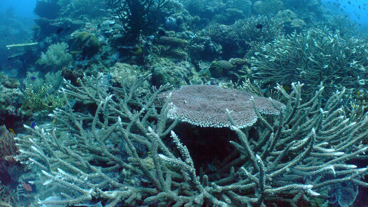 Scientists are concerned that all reefs, including these healthy ones in the Coral Triangle north of Australia, shown in 2012, will suffer as the oceans continue to absorb more carbon dioxide and become increasingly acidic.