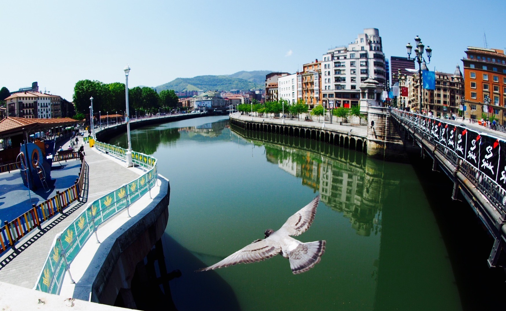 Pigeon over the Nervin river; Bilbao, Basque Country