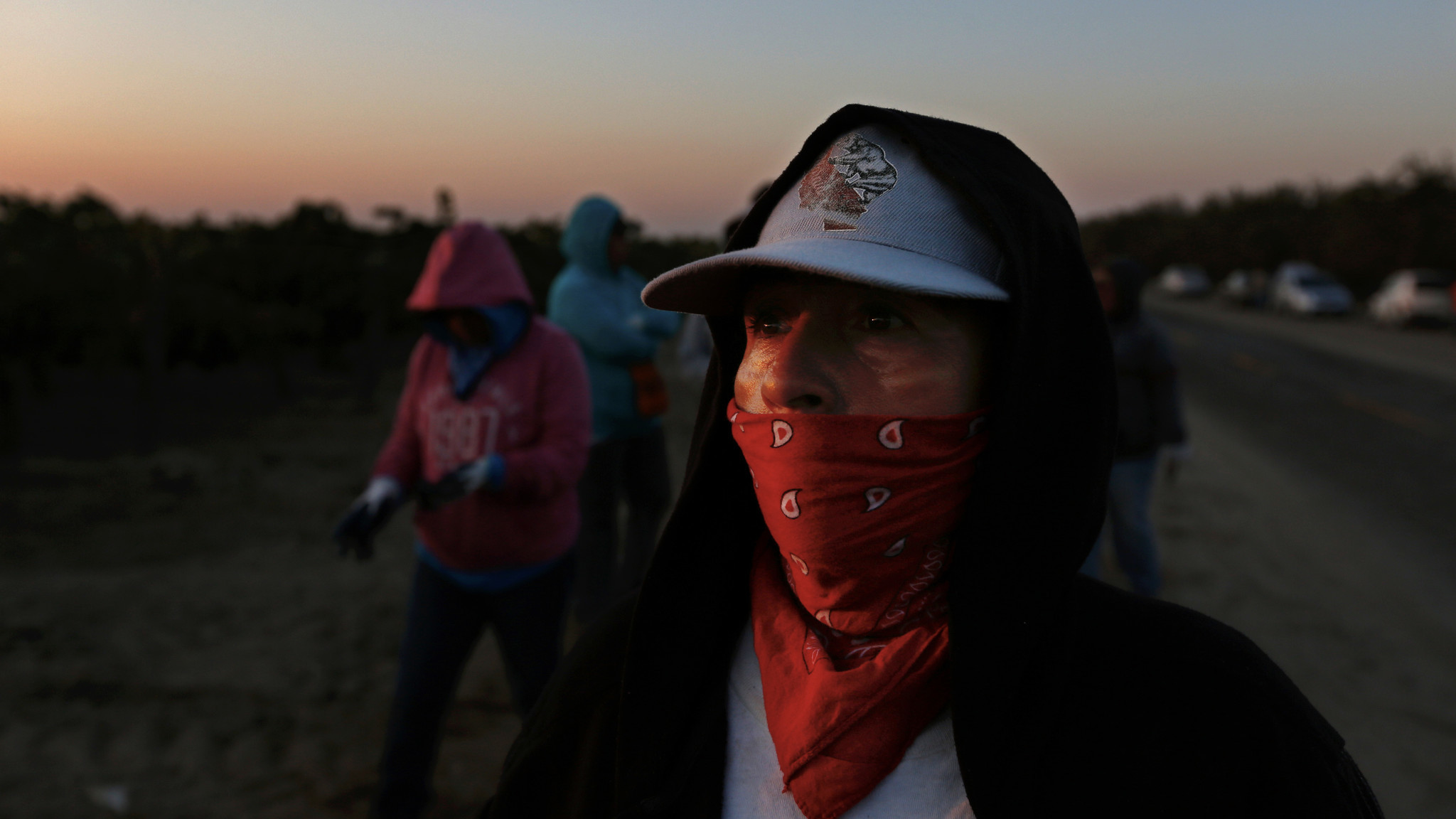 Lourdes Cardenas, 53, waits for the OK to begin picking grapes in a field in Madera, Calif.,