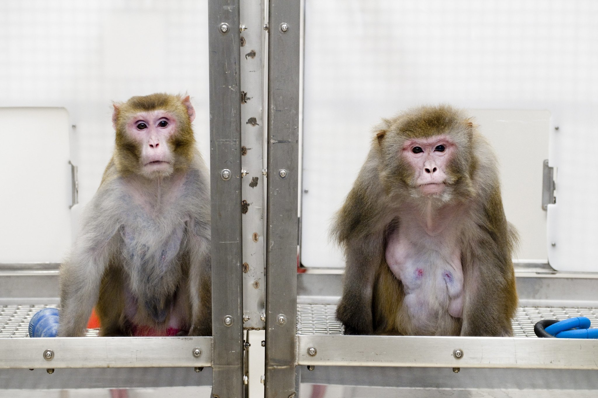 using animals for medical testing is unethical and unnecessary