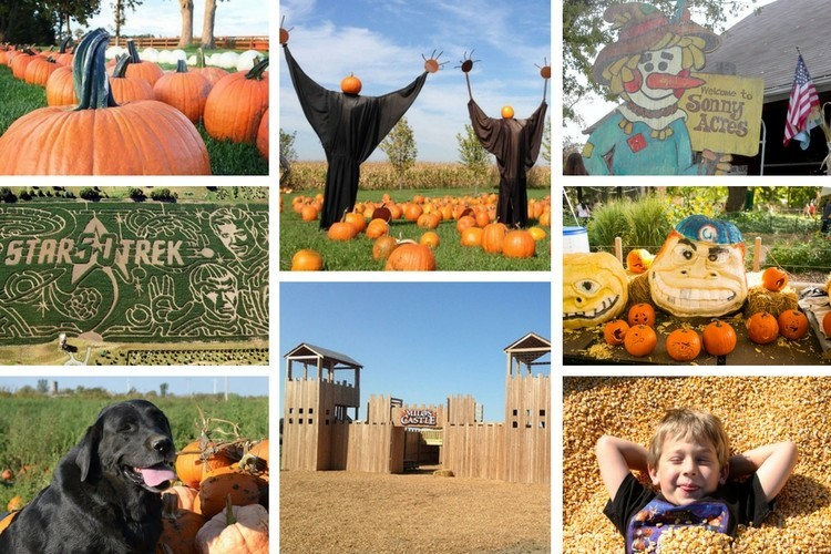 Chicago Area Pumpkin Patches 40 To Choose From Chicago Tribune
