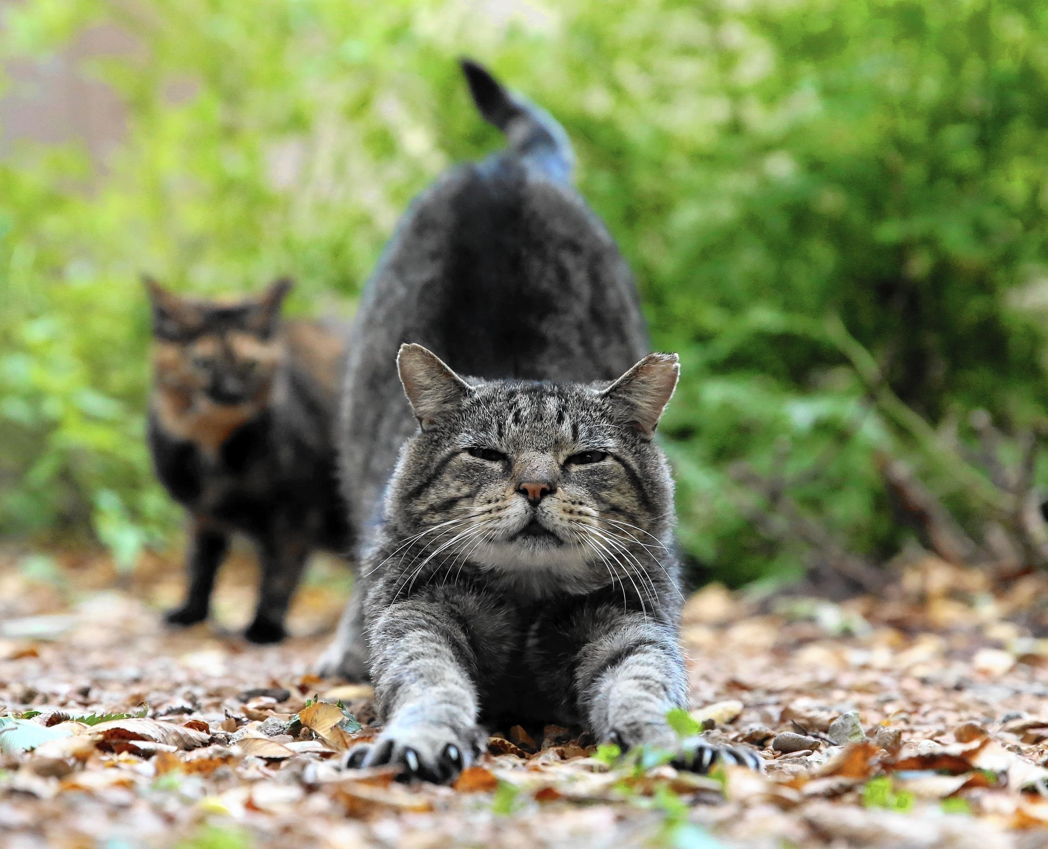 evanston apartment complex employs feral cats to take on rats