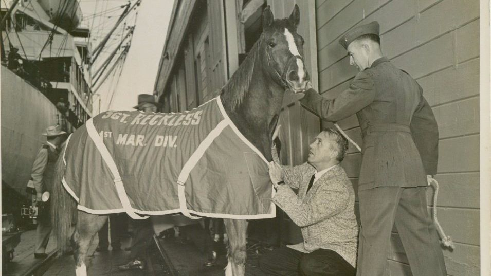 Historical photo of Staff Sgt. Reckless