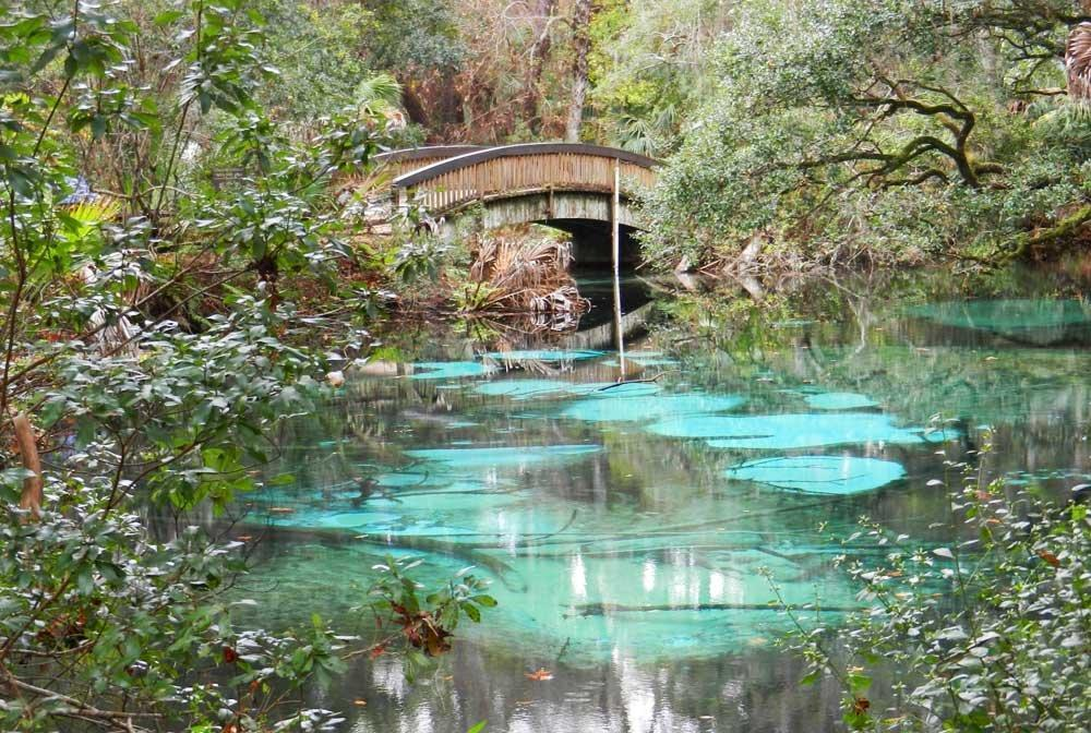 6 Things To Do In Ocala National Forest Sun Sentinel