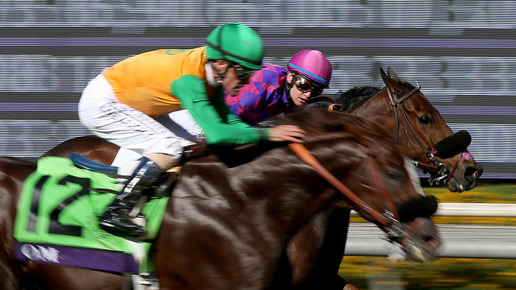 Slideshow Photos From The 2016 Breeders Cup Races La Times