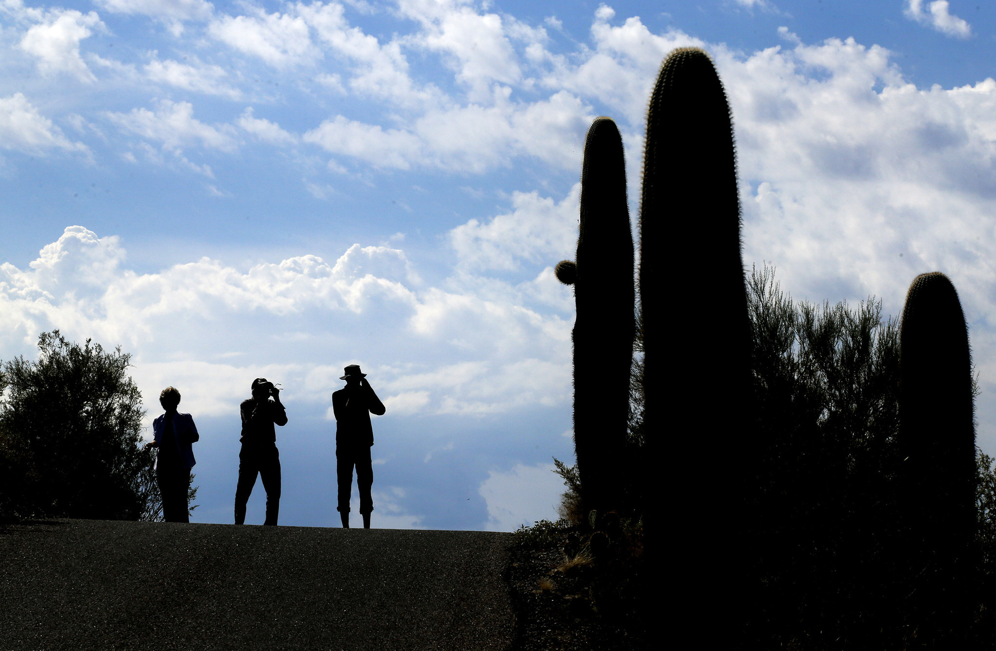 Visitors snap pictures of the iconic cactuses along Cactus Forest Drive in Saguaro National Park.