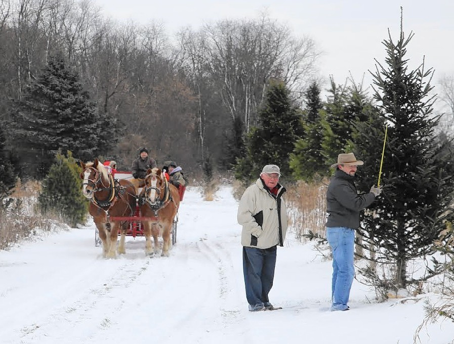 Skip Black Friday shopping; spend the day at the Christmas tree farm -  Post-Tribune - Skip Black Friday Shopping; Spend The Day At The Christmas Tree Farm