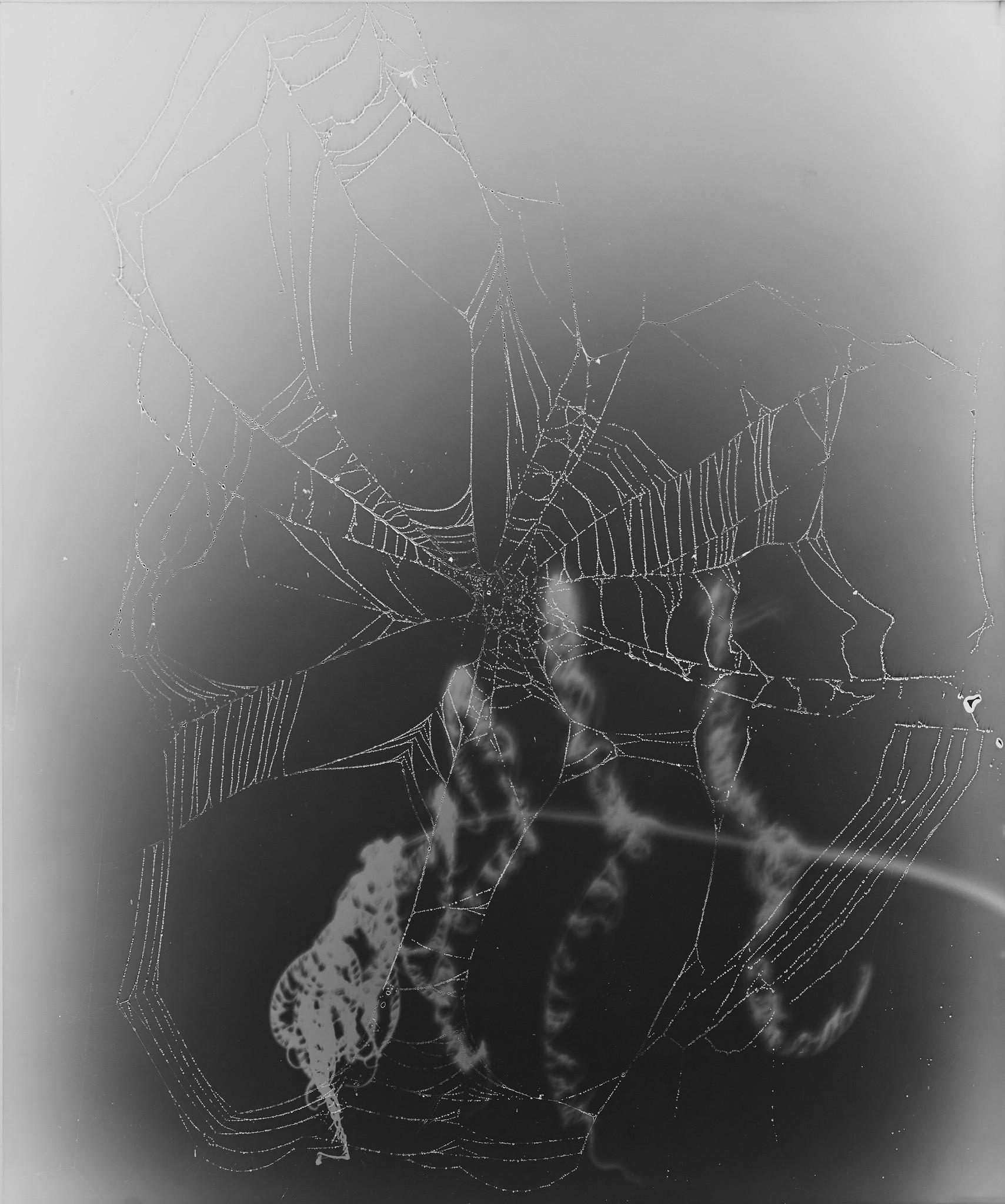 """Web Study #17,"" 2015, unique gelatin silver photogram."