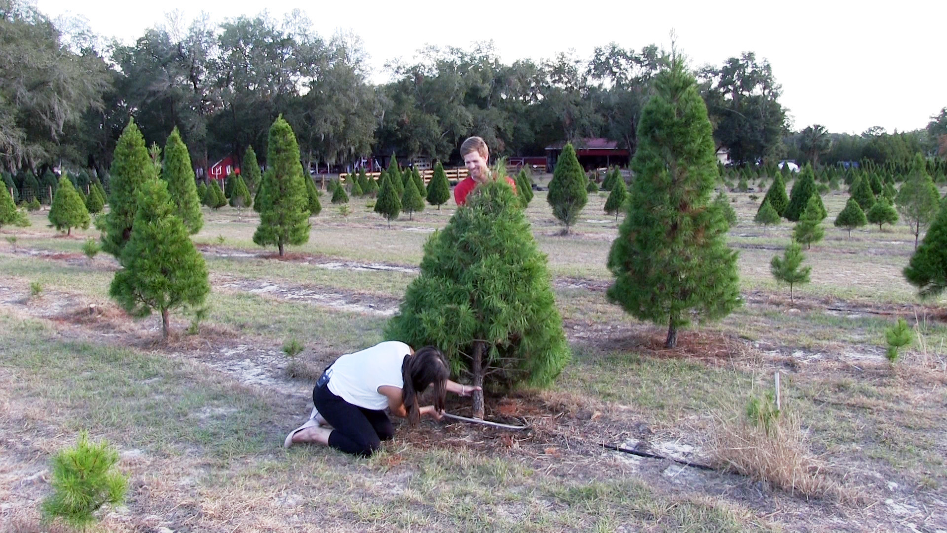 Where You Can Cut Down Your Own Christmas Tree