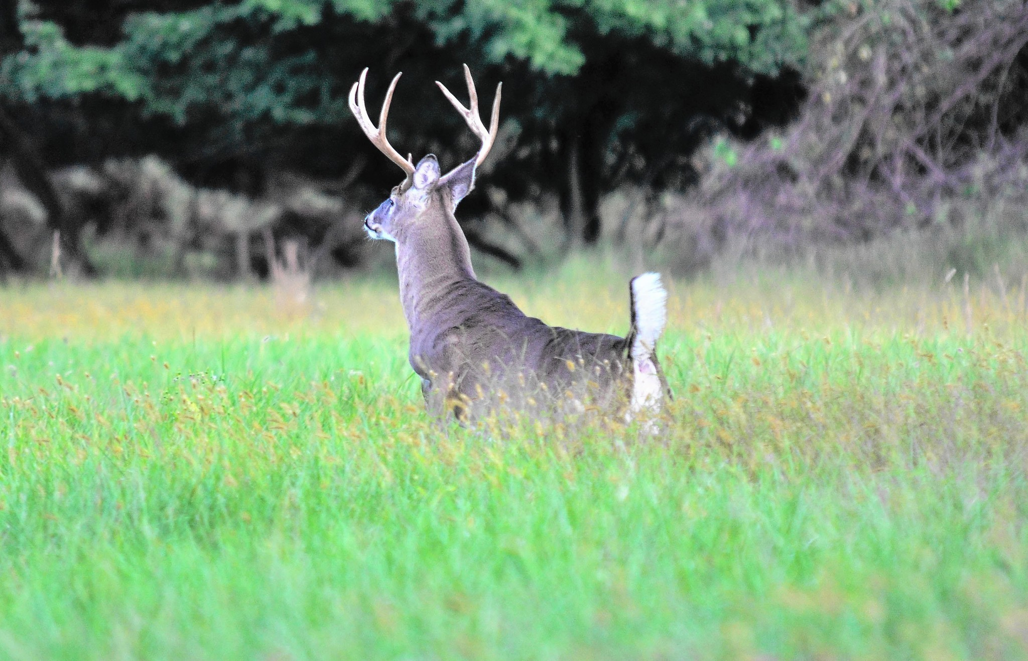 What Can I Feed Deer In My Backyard feeding deer corn in the winter - carroll county times