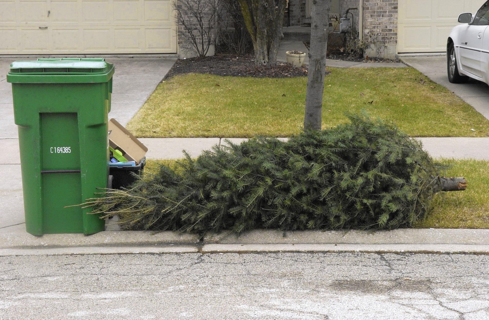 Set Up A Real Christmas Tree
