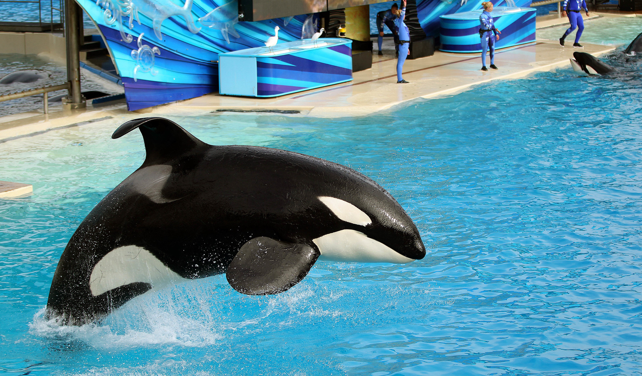Seaworld San Diego Map Pdf.Seaworld Bids Farewell Sunday To Shamu Show The San Diego Union