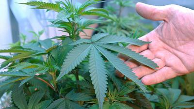 Patients, doctors get green light for medical marijuana