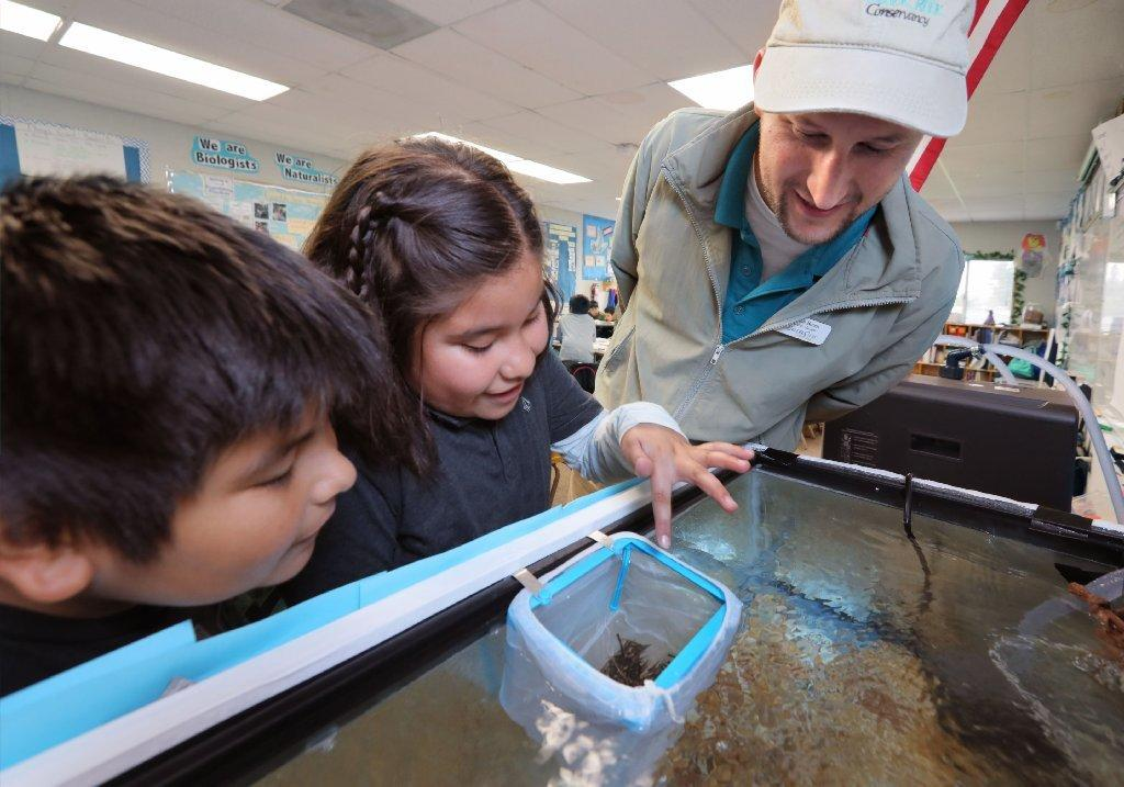 Simon Breen, Education Manager of The Escondido Creek Conservancy, inspects two week old trout with fourth graders Ezekiel Acosta, left, and Karla Gonzalez at Conway Elementary S