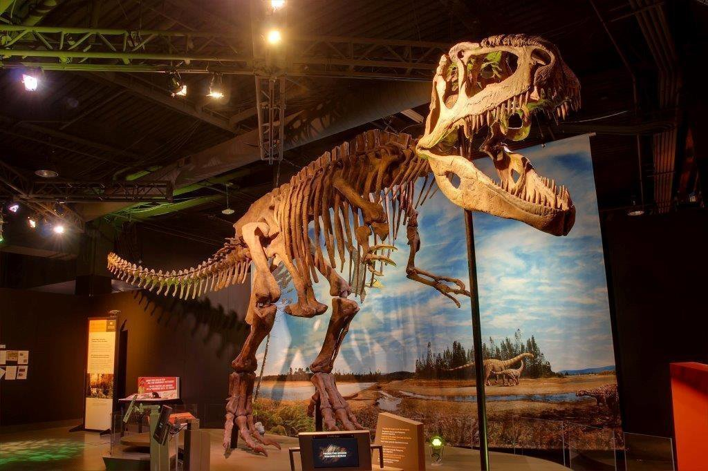 'Ultimate Dinosaurs' at the San Diego Natural History ...