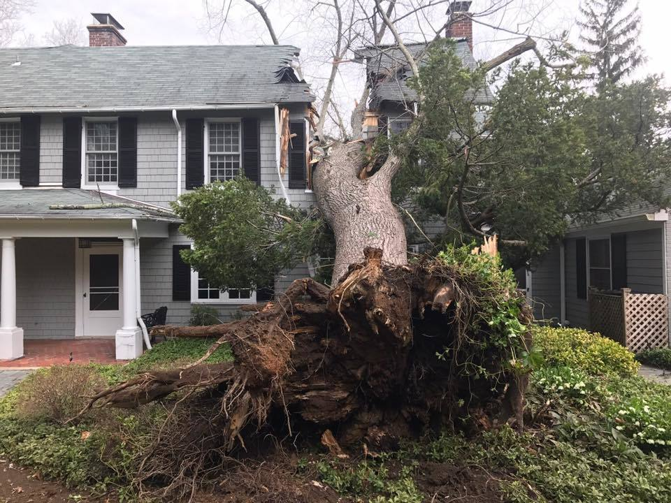High Winds Bring Tree Crashing Down On Towson Home