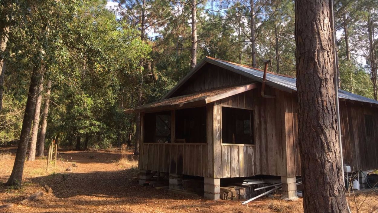 Wildlife On The Wing Return To Lake Apopka Orlando Sentinel