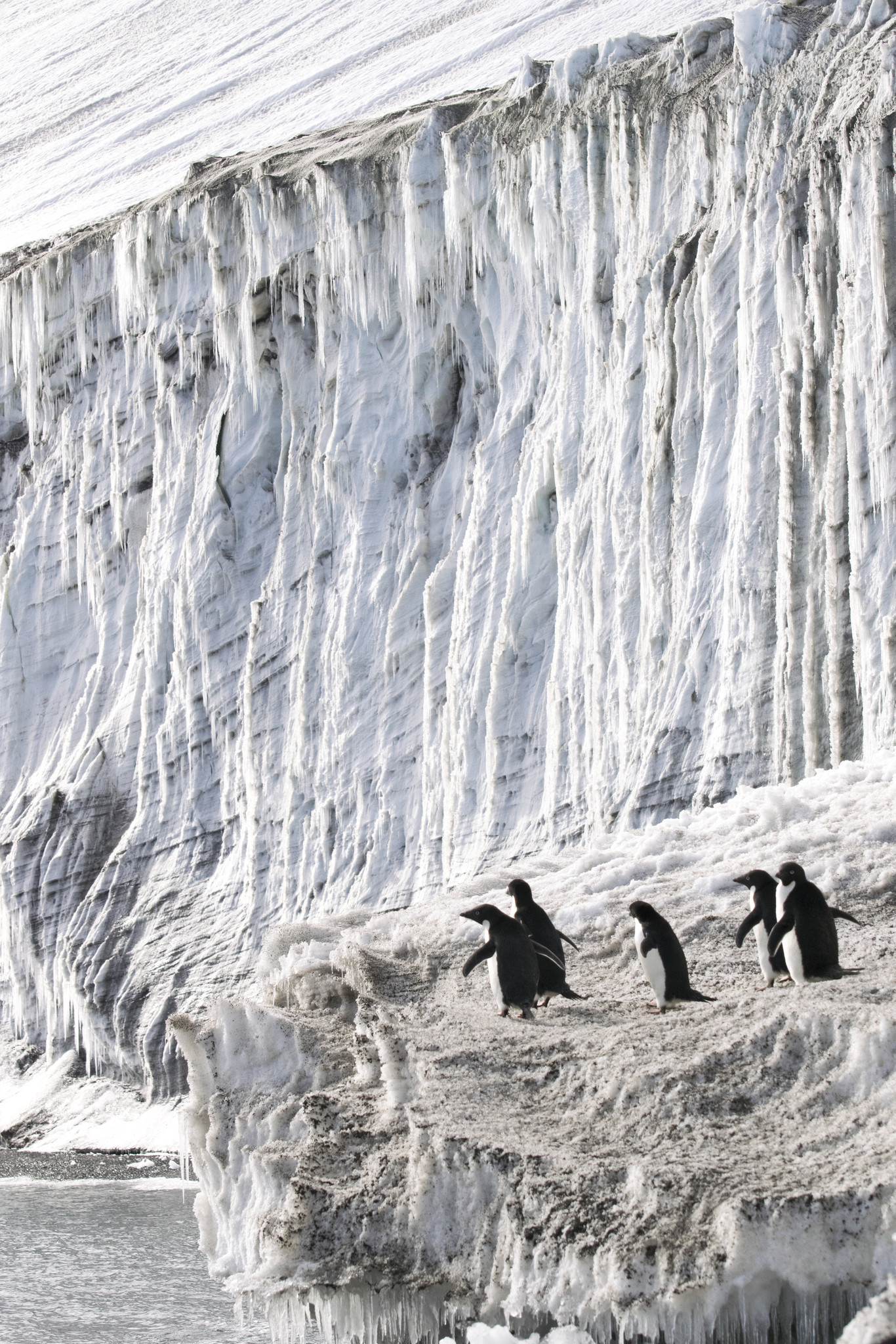 An amazing view of Antarctica wildlife and scenery.