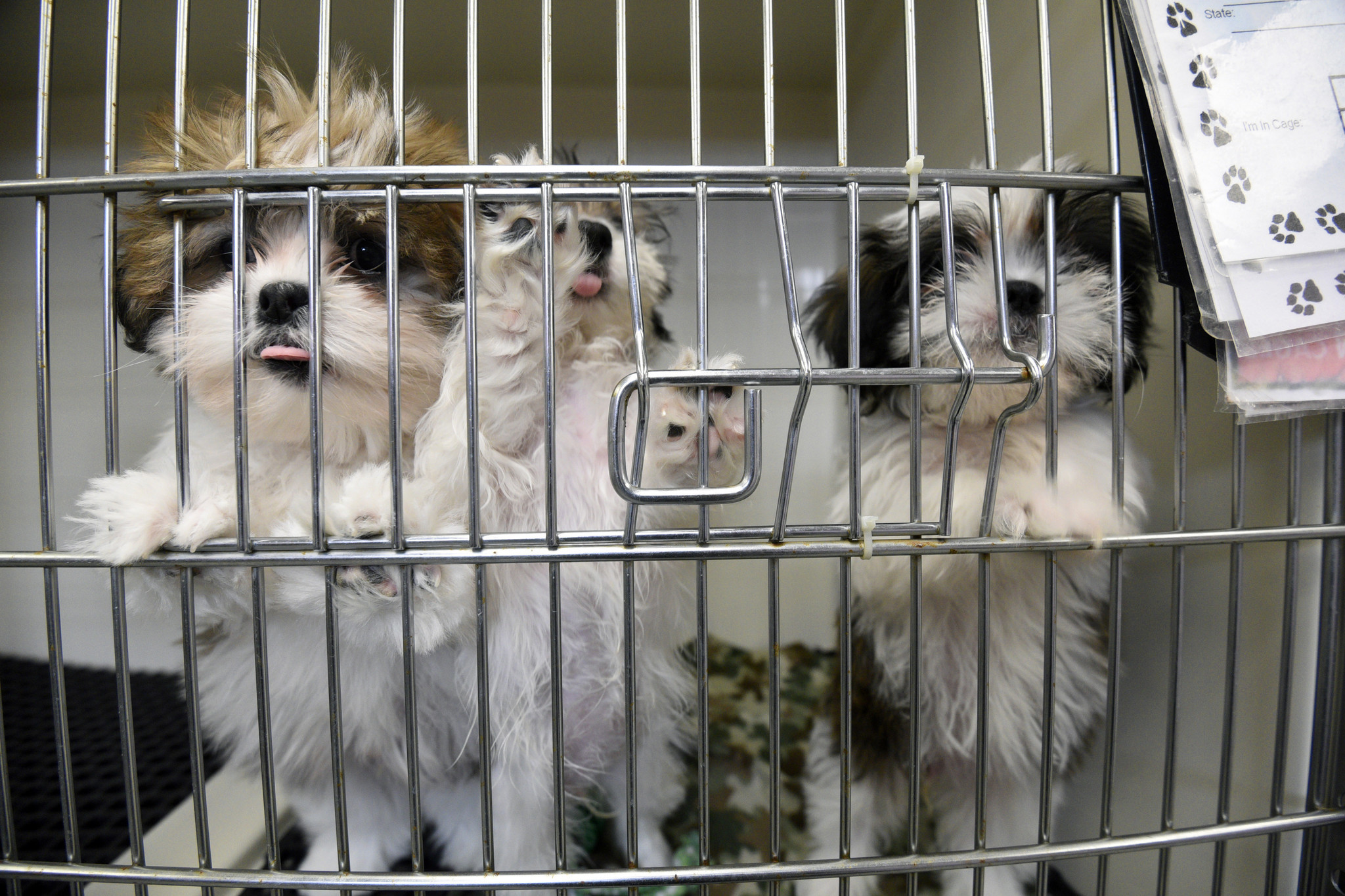Maryland Puppy Mill Law Undermined By Usda Removes Animal Welfare