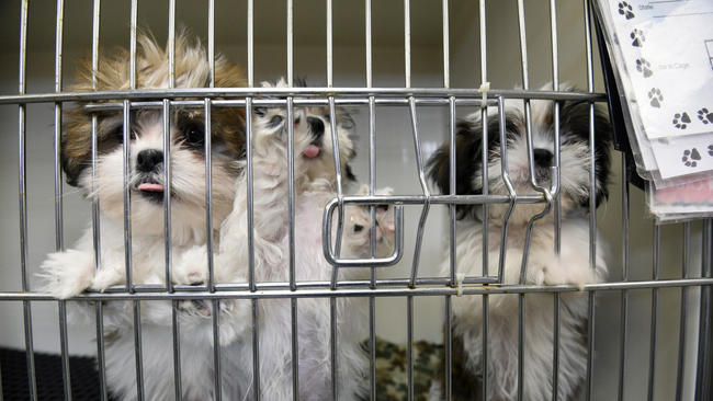 Maryland puppy mill law undermined by USDA removes animal