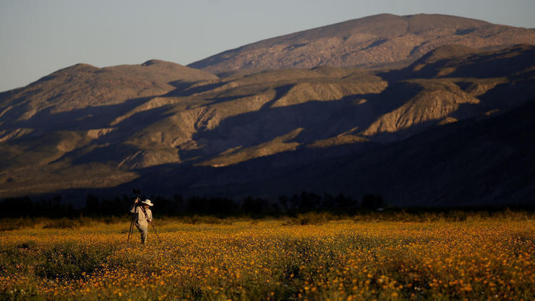 LA 90: The desert is in super bloom at Anza-Borrego state park