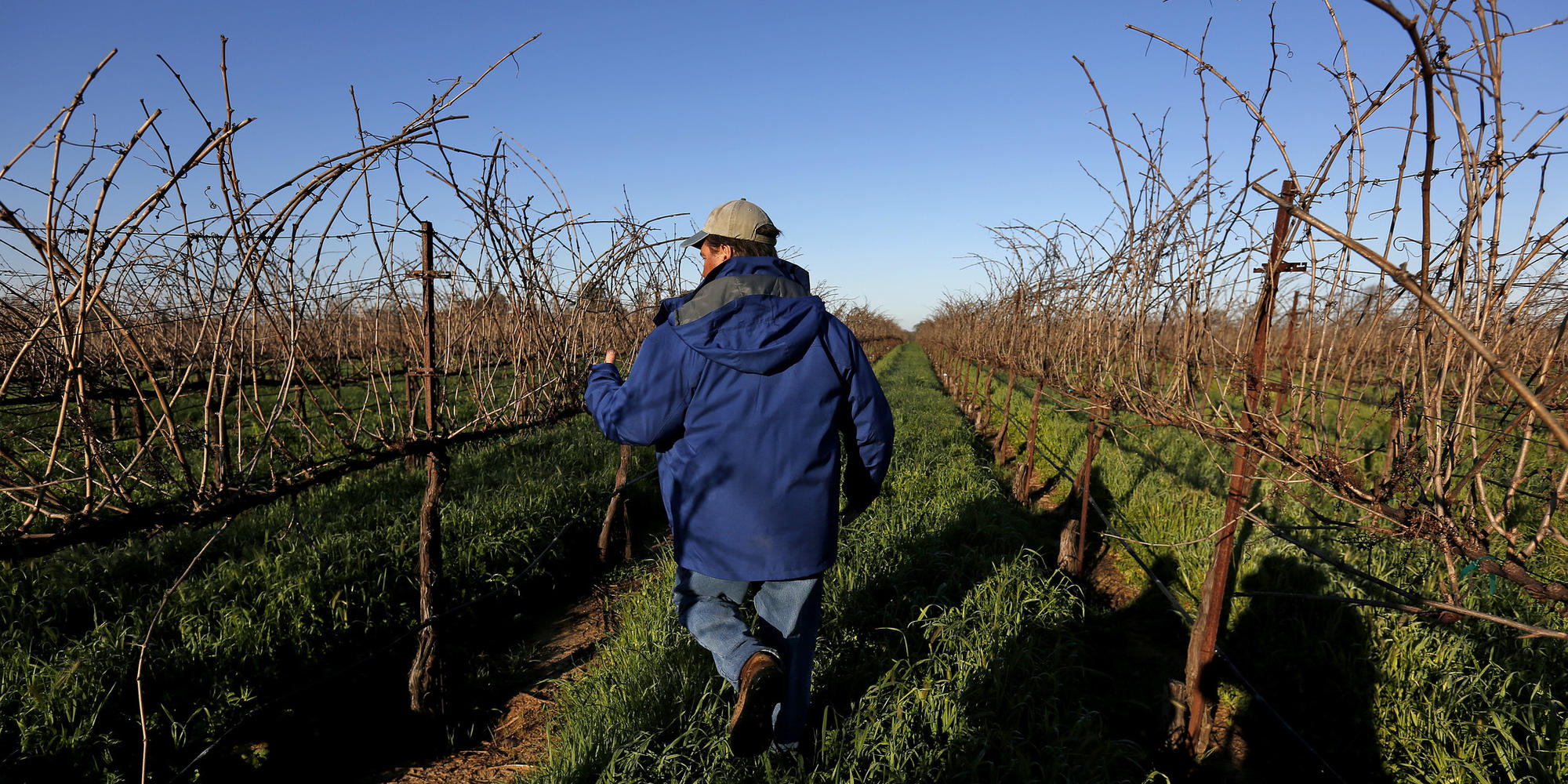Wages rise on California farms  Americans still don't want the job