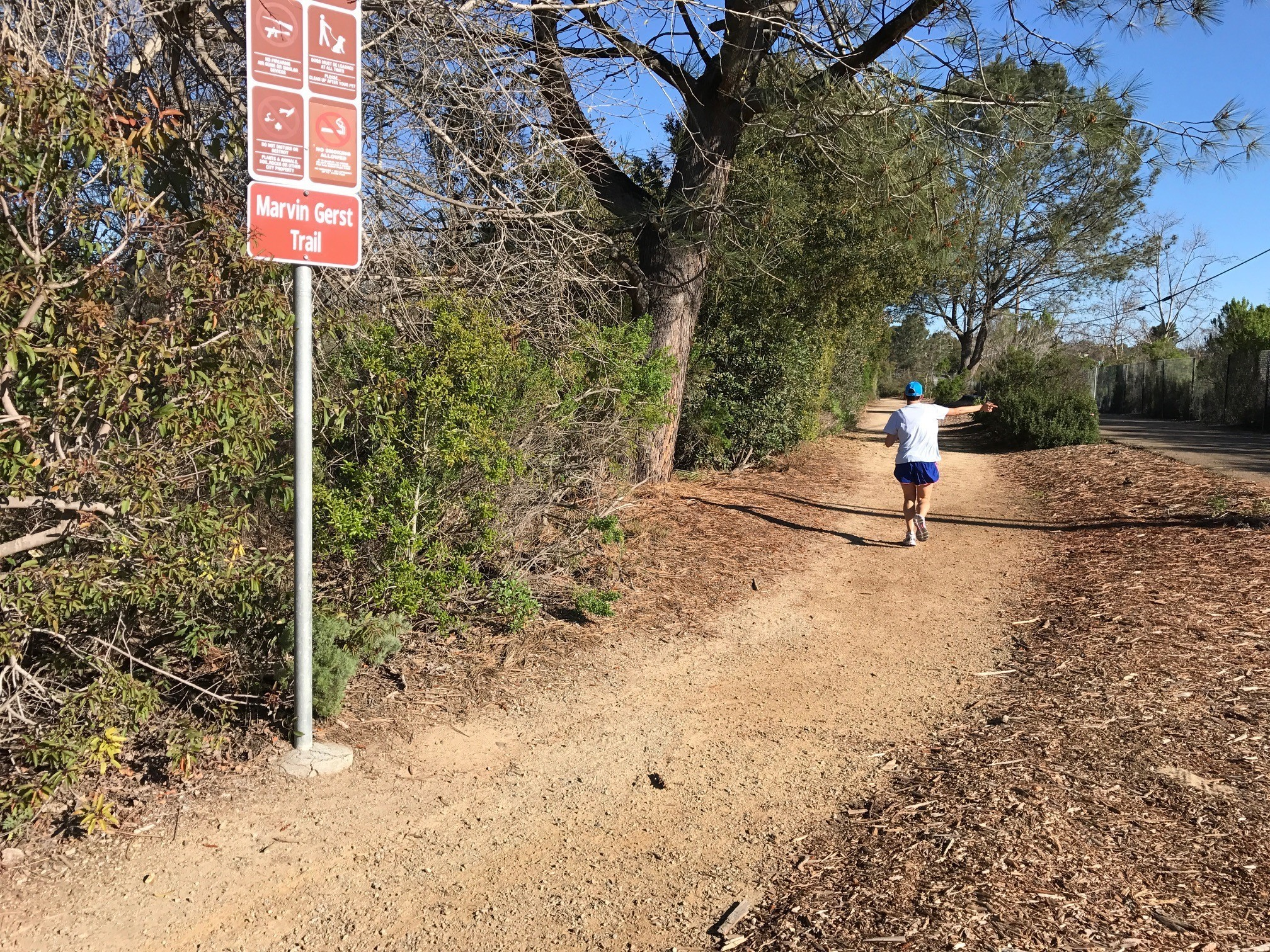 A runner on Marvin Gerst Trail.