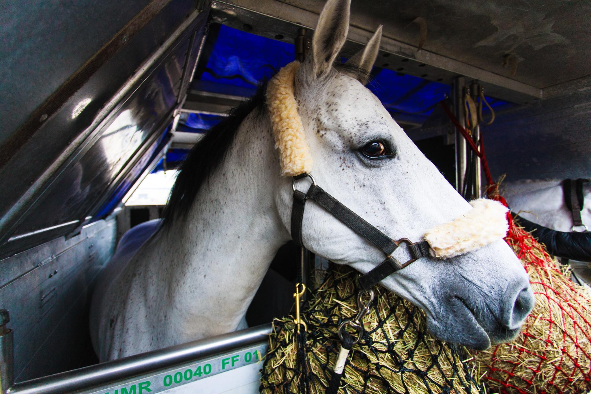 Cavalia Horses Arrive At Chicago O Hare Chicago Tribune