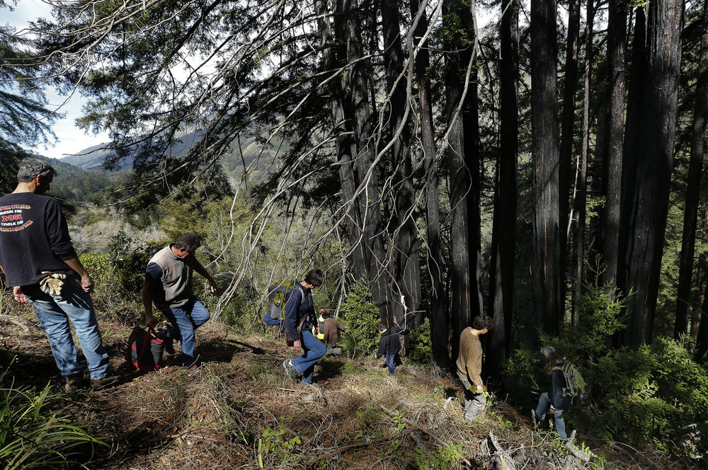 Residents on the south side of Pfeiffer Canyon Bridge bushwhack their way into Pfieffer Big Sur State Park to move their cars to make room for the construction crane that would demolish the condemned span.