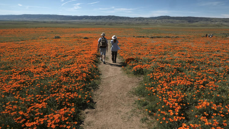 California super bloom
