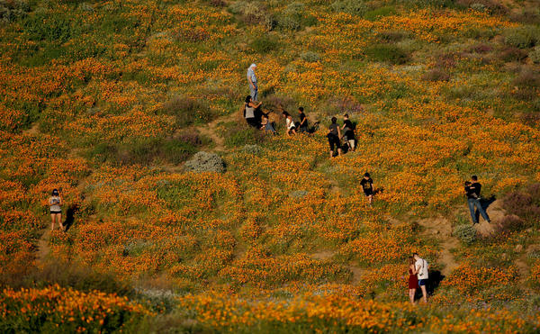Visitors explore the poppy-filled hillside off Highway 15 in Walker Canyon Temescal Mountains, near Lake Elsinore.