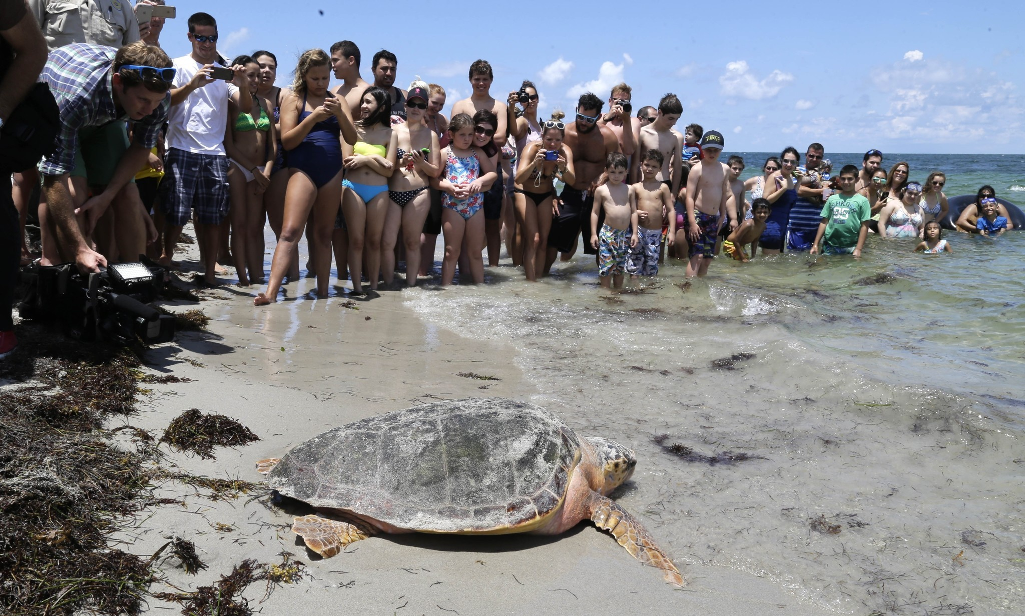 It S Sea Turtle Season In Florida Here How To See Them Chicago Tribune