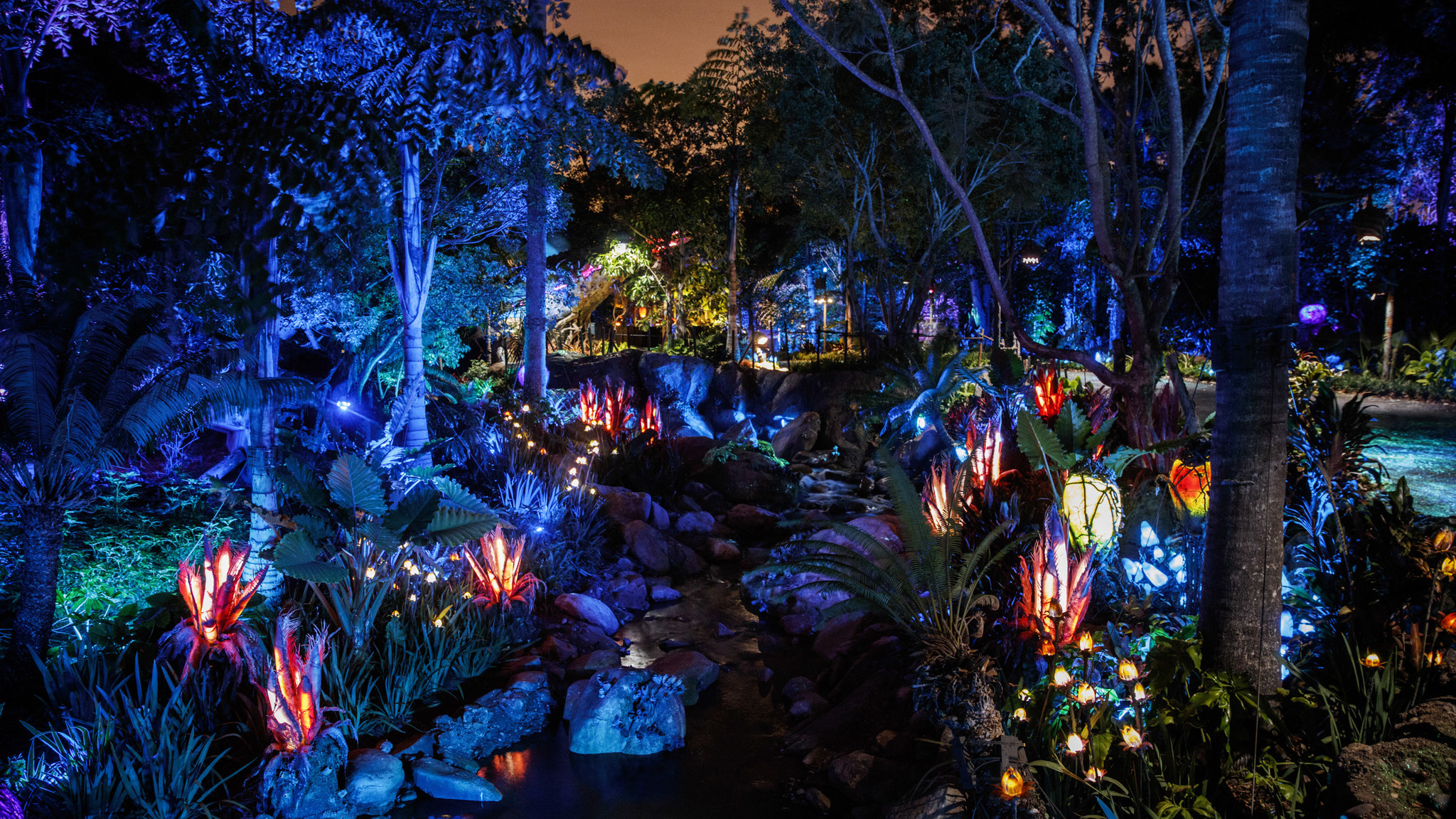 Pandora nature at night.