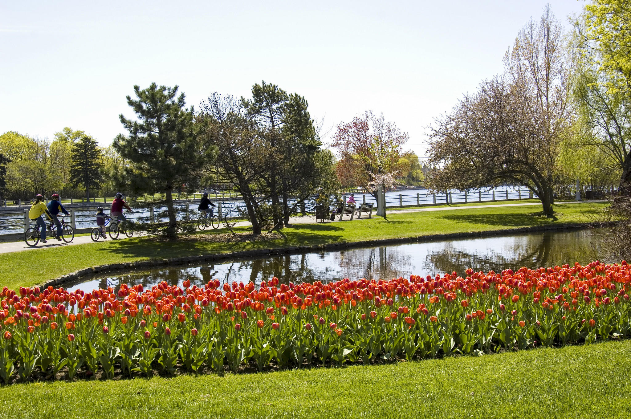 Cycling along the Rideau Canal during the Canadian Tulip Festival.
