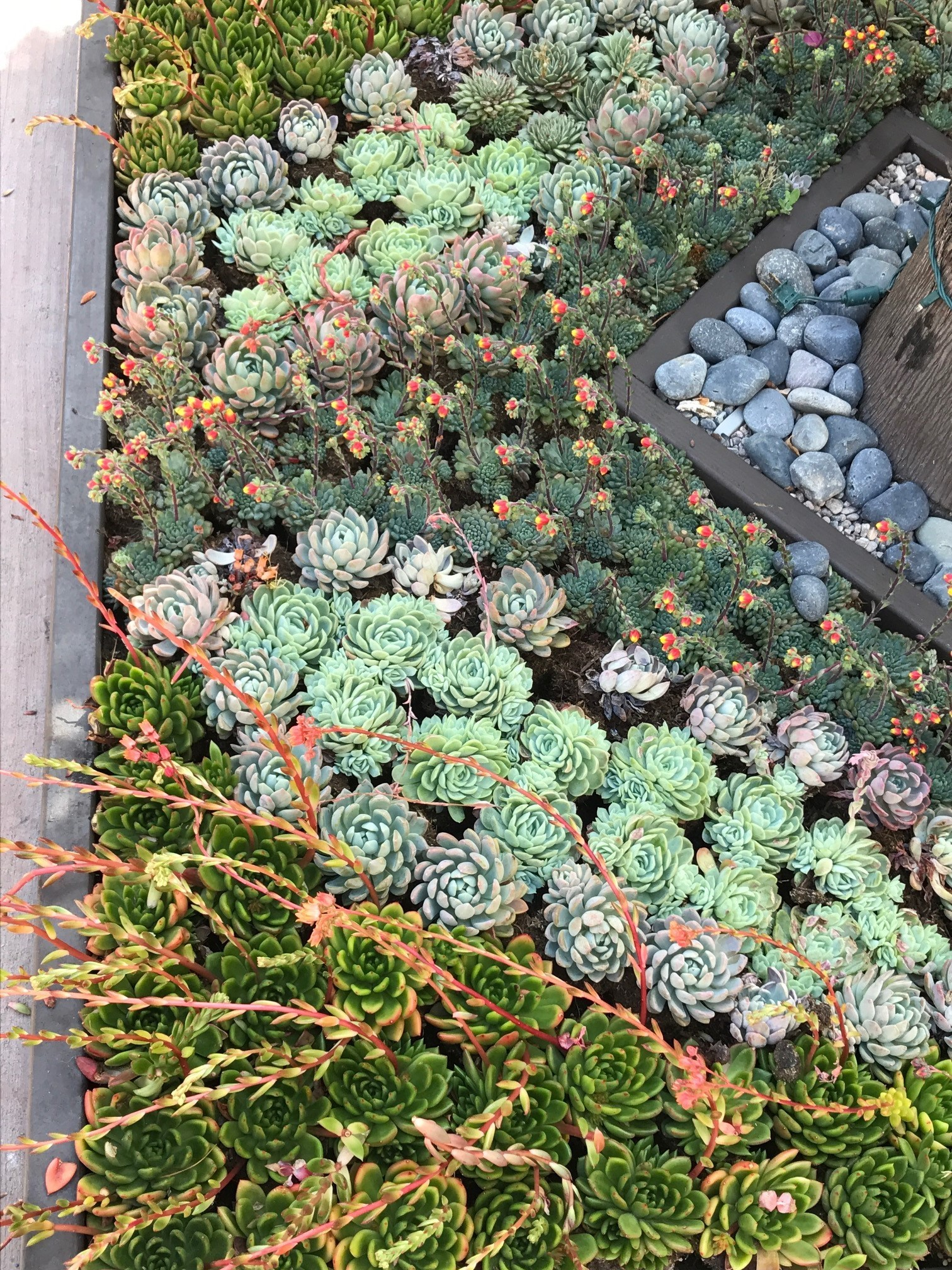 A succulent display at Flower Hill.