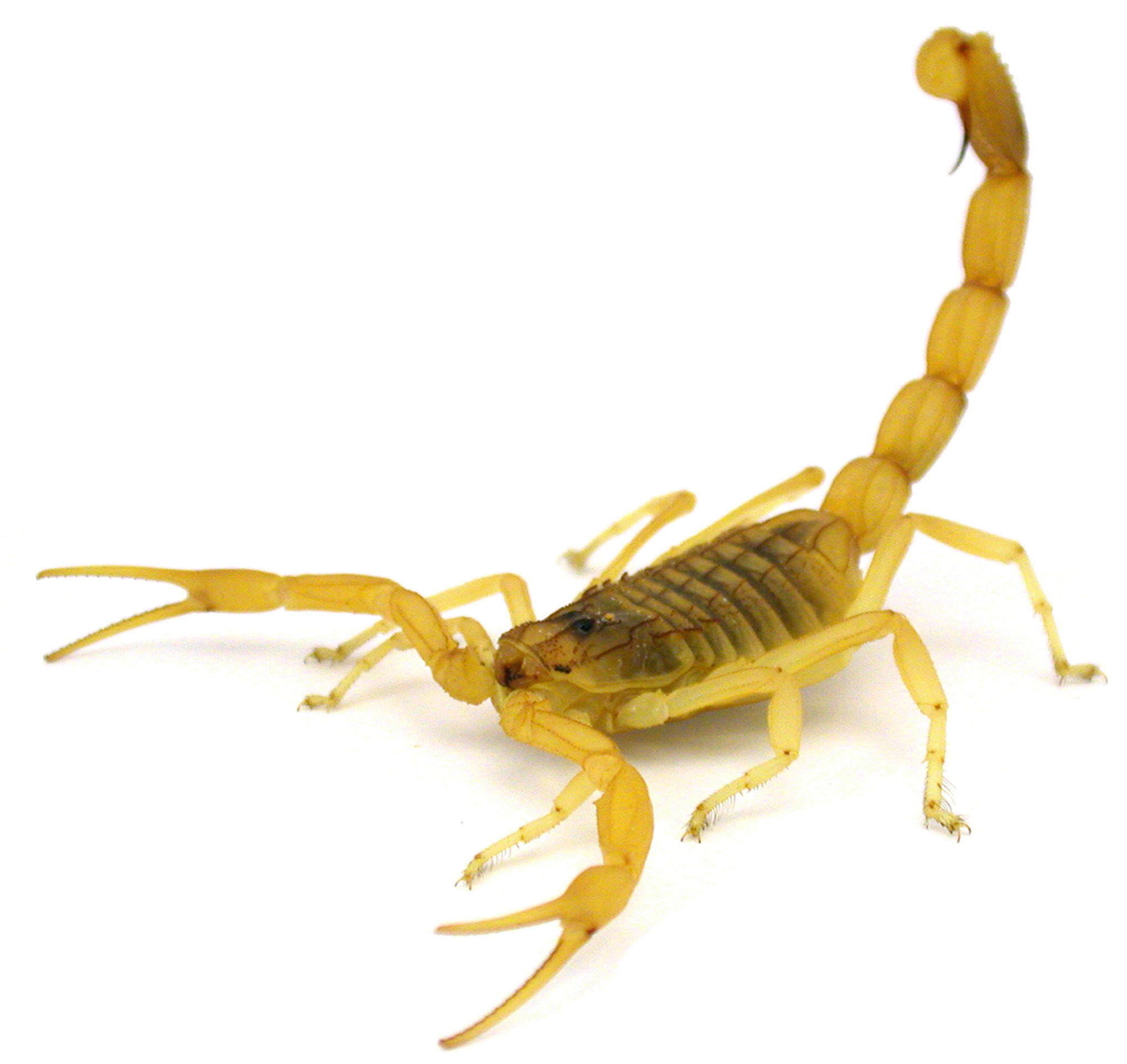 United flight delayed after scorpion reported aboard ...