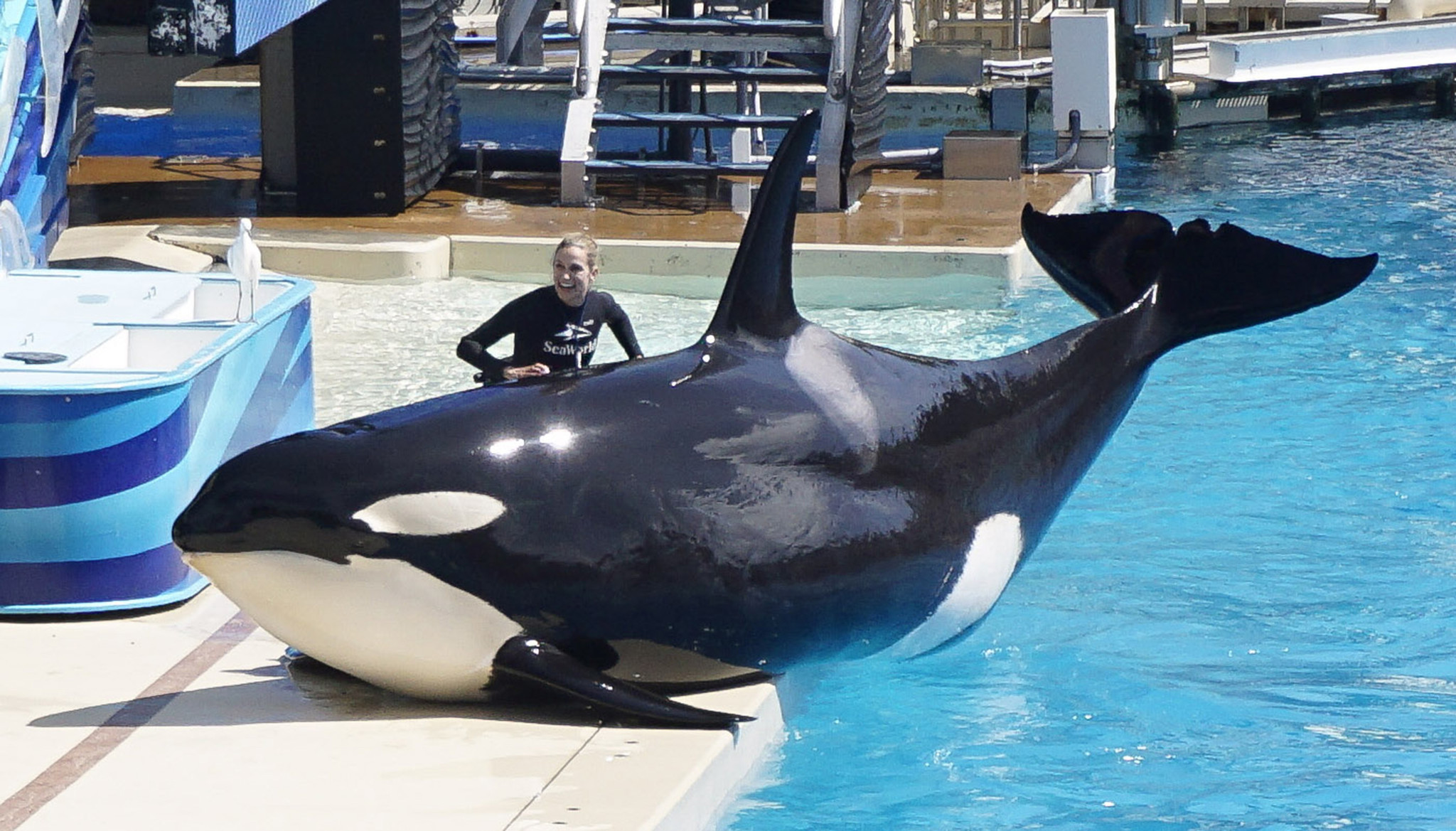seaworld diego orca blackfish encounter orlando shows nivel nacional