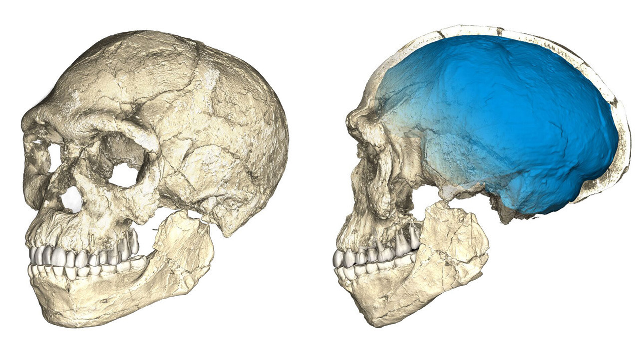Two views of a composite reconstruction of the earliest known Homo sapien fossils from Jebel Irhoud in Morocco. The reconstruction is based on micro-CT scans of multiple original fossils.