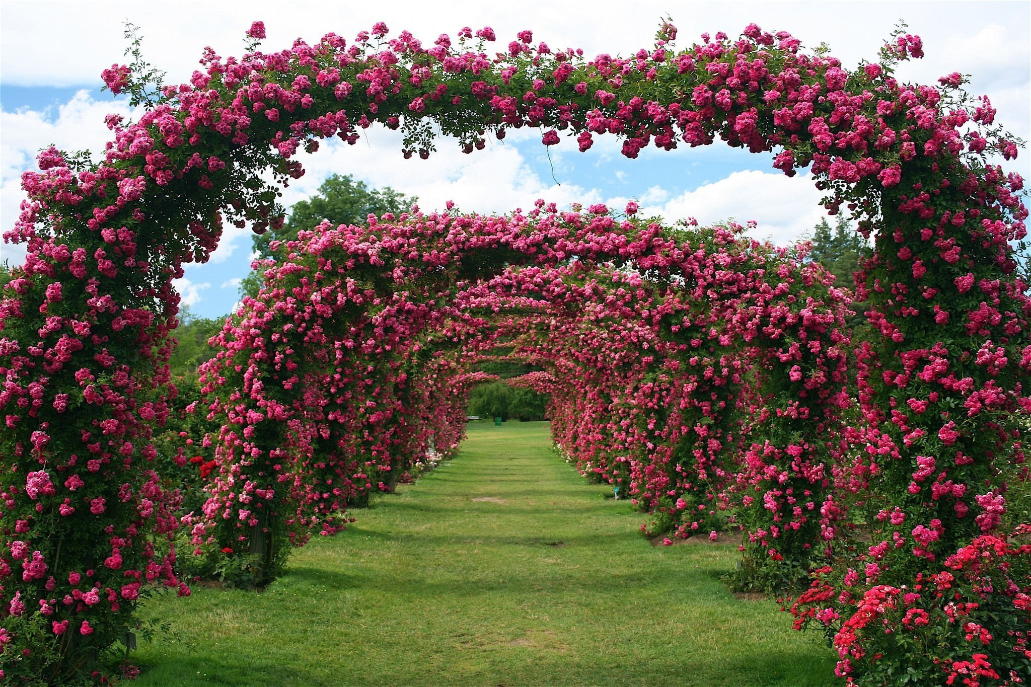 Roses In Garden: Write Stuff: Local Author Fest In Avon; Free Rose Garden