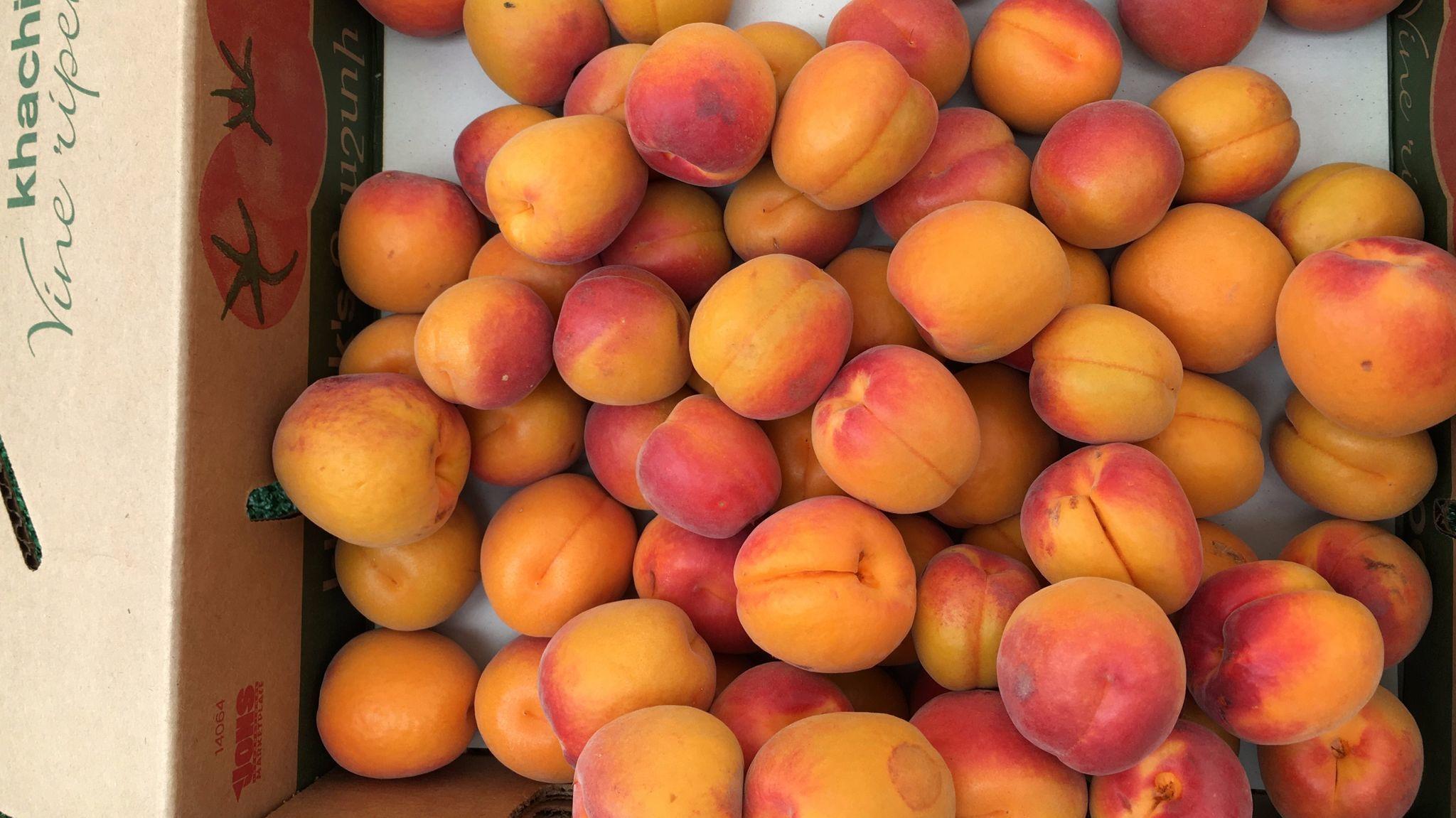 Apricots Are In Season We Have Recipes La Times