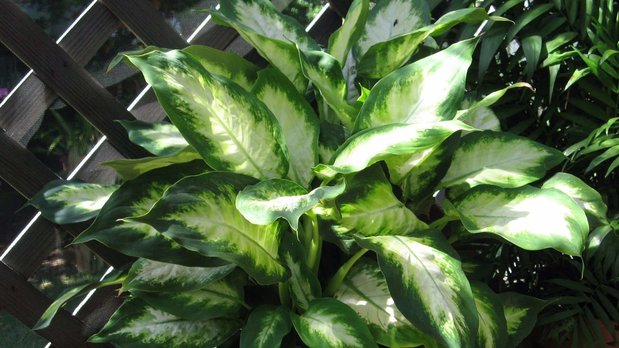 Plant Doctor Rest Weary Indoor Foliage Plants Outdoors