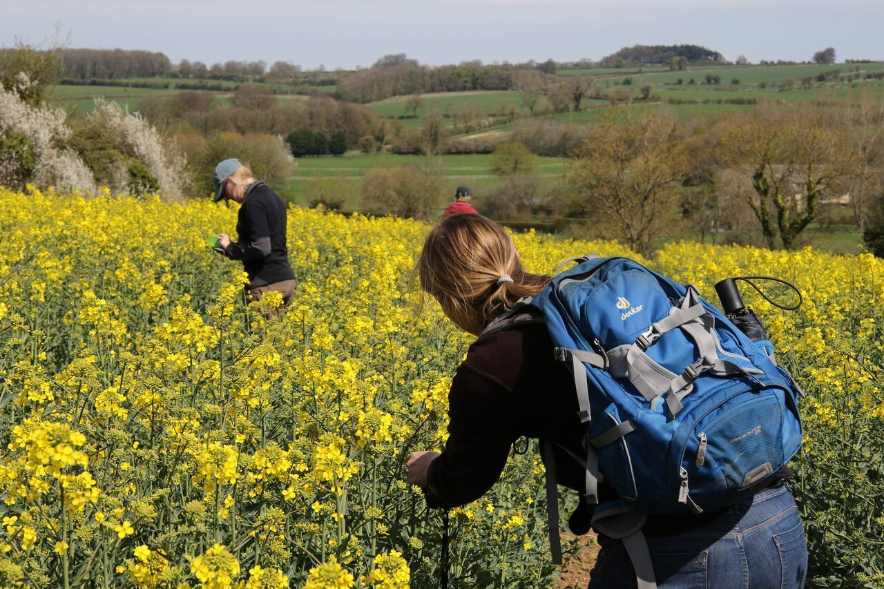 Ecologists from the Centre for Ecology and Hydrology assess rapeseed crops planted with neonicotinoids