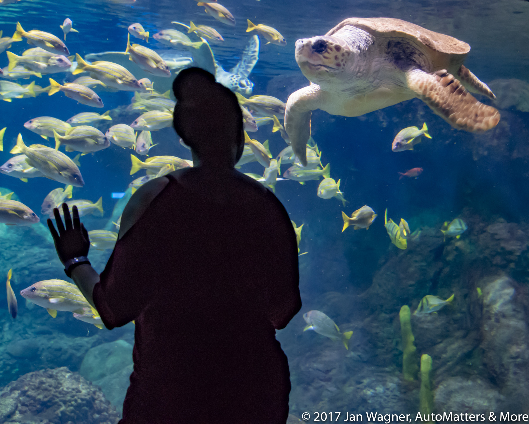Interacting with a sea turtle