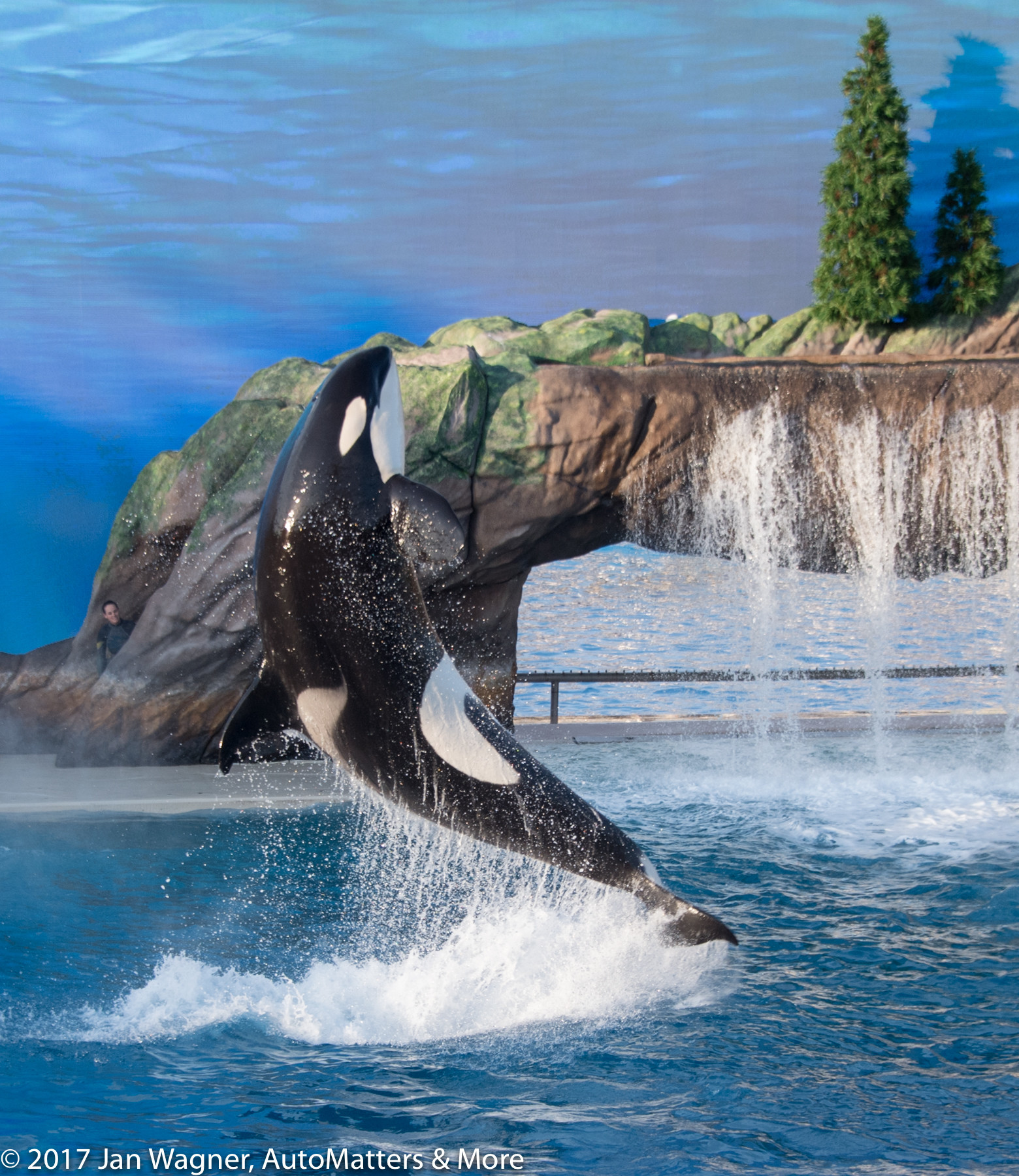 Killer whale breaching in the Orca Encounter